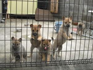 20091127-2009_11_dog_54_1