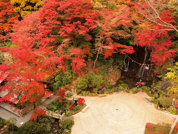 箱根湯本の天成園では今月末が紅葉の見ごろです♪